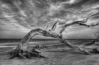 Wind Bent Driftwood Black And White Art Print by Greg and Chrystal Mimbs