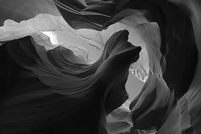 Photograph - Wind Dancer by Dustin  LeFevre