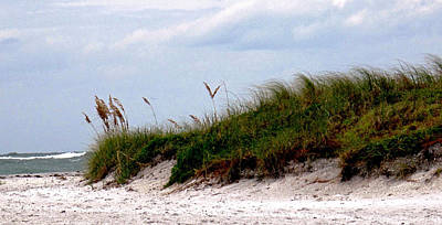 Photograph - Wind In The Seagrass by Ian  MacDonald