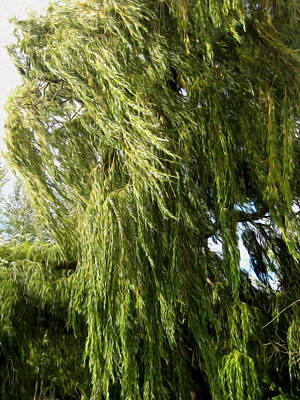 Wind In The Willow Print by Kathy Bassett