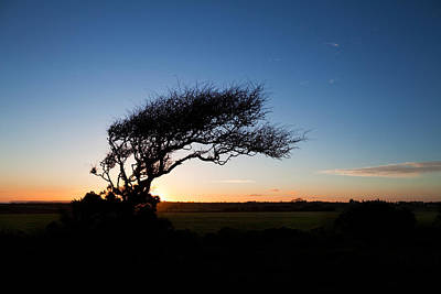 Sculptural Photograph - Wind Sculptured Hawthorn Tree, The by Panoramic Images