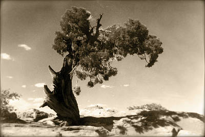 Cedar Photograph - Wind Swept Tree by Scott Norris