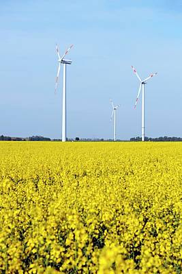 Trio Photograph - Wind Turbines In Rapeseed Field by Bildagentur-online/mcphoto-schulz