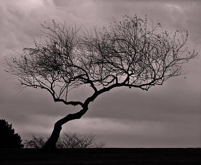 Photograph - Windblown by Richard Engelbrecht