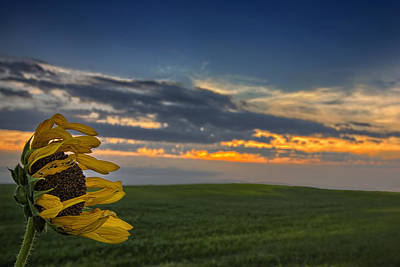 Prairie Sunset Wall Art - Photograph - Windblown by Thomas Zimmerman