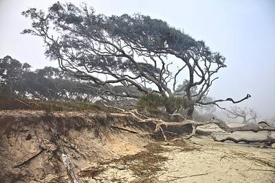 Photograph - Windblown Tree On Jekyll by Gordon Elwell