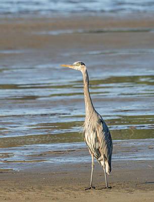 Photograph - Windblown Heron by Loree Johnson