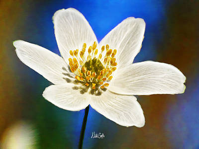 Cafe Art Digital Art - Windflower Whispers by Nikki Marie Smith