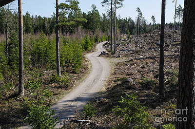 Photograph - Winding Forest Dirt Road by Kennerth and Birgitta Kullman