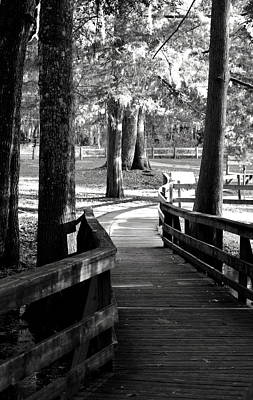 Photograph - Winding Path 1 Bw by Sheri McLeroy