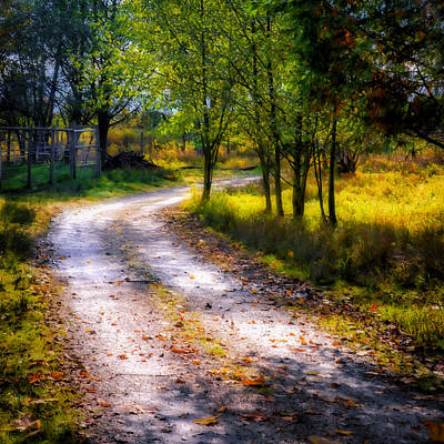 Photograph - Winding Path In Autumn by Marion McCristall