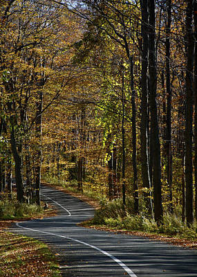 Photograph - Winding Road In The Woods by Owen Weber