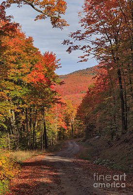 Winding Road Photograph - Winding Through Westmore by Charles Kozierok
