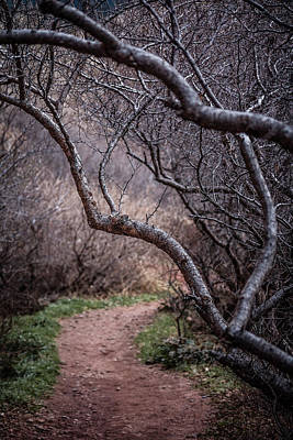 Photograph - Winding Trail by Karen Saunders