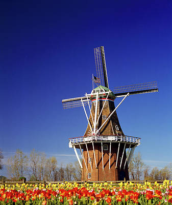 Windmill In A Tulip Field, De Zwaan Art Print