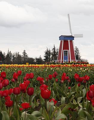 Art Print featuring the photograph Windmill Red Tulips by Athena Mckinzie