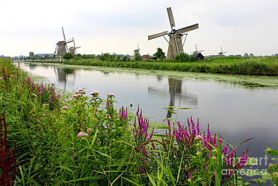 Photograph - Windmills Of Kinderdijk With Wildflowers by Carol Groenen
