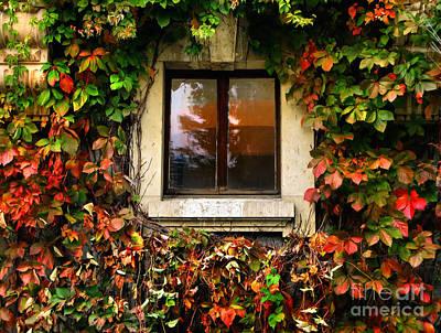 Photograph - Window And Autumn Ivy by Daliana Pacuraru