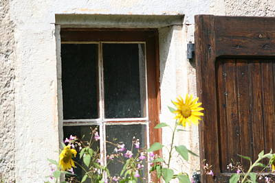 Photograph - Window And Sunflower by Phoenix De Vries