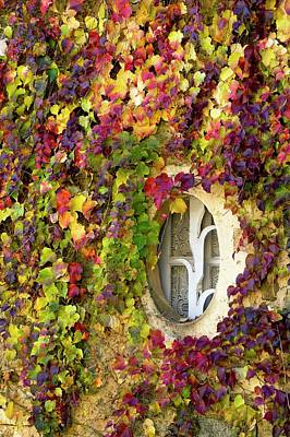 Angiosperm Photograph - Window Covered In Virginia Creeper by Bob Gibbons