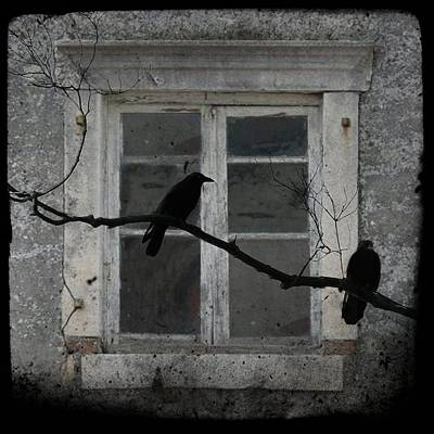 Two Crows Photograph - Window Dressing by Gothicrow Images