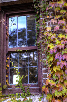 Photograph - Window In Mayslake Ivy by Ed Cilley