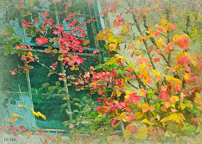 Photograph - Window Of Autumn by Lorella  Schoales