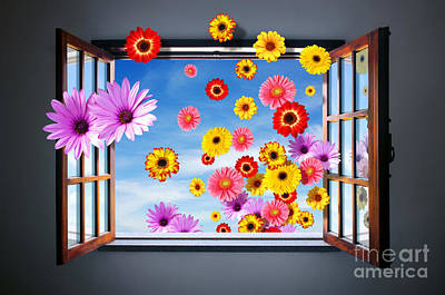 Photograph - Window Of Flowers by Carlos Caetano