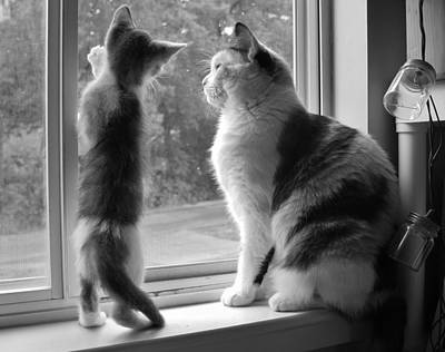 Of Calico Cats Photograph - Window Of Opportunity Bw by Elizabeth Sullivan