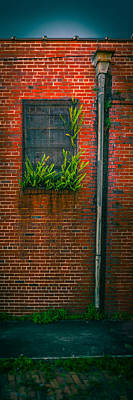Window Weeds Art Print