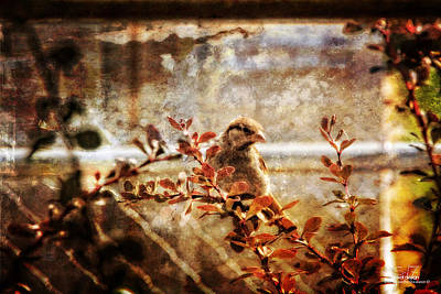 Photograph - Window Wren by Dan Quam