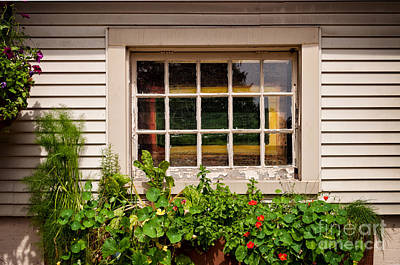 Photograph - Windows And Flowers by Les Palenik