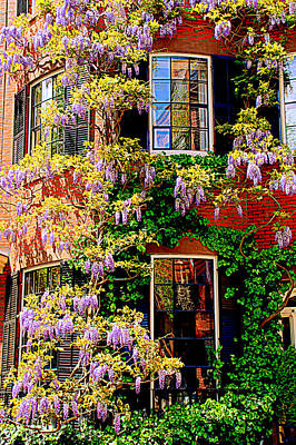 Photograph - Windows And Wisteria by Caroline Stella