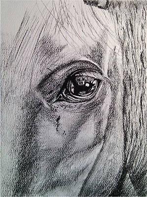 Drawing - Windows I Horse. by Paula Steffensen