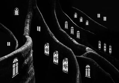 Dark Roots Photograph - Windows Of The Forest by Jacqueline Hammer