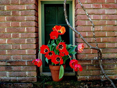 Photograph - Windows Series - 4 by Haleh Mahbod
