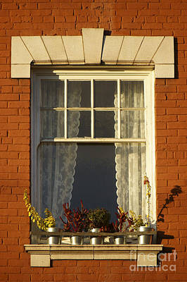 Photograph - Windowsill Garden by John  Mitchell