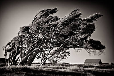 Windswept Art Print by Dave Bowman