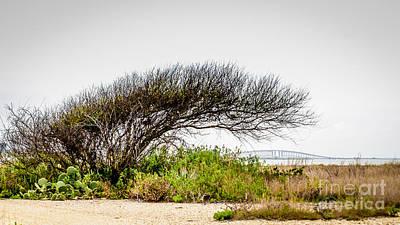 Photograph - Windswept by Debra Martz