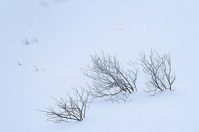 Trees In Winter Photograph - Windswept by Jeff Sinon