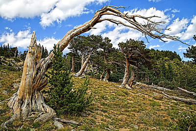 Photograph - Windswept by Jim Garrison