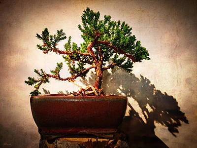 Photograph - Windswept Juniper Bonsai by Shawna Rowe