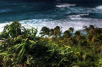 Photograph - Windswept Palms by Joshua Cramer