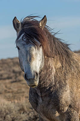Gray Mare Photograph - Windswept by Sandy Sisti