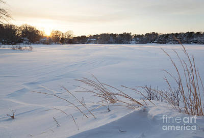 Photograph - Windswept Snowscape by Michelle Wiarda-Constantine