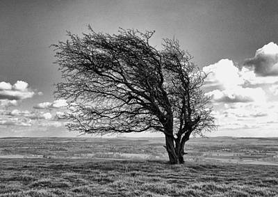 Photograph - Windswept Tree On Knapp Hill by Paul Gulliver