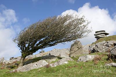 Windswept Tree Original