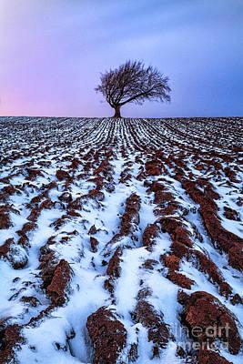 Windswept Tree Scotland Art Print