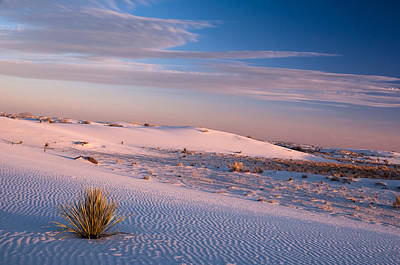 Janet Smith Photograph - Windy Dunes by Janet Smith