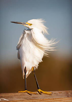 Windy Egret Art Print by Tammy Smith